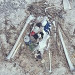 Laysan_albatross_chick_remains