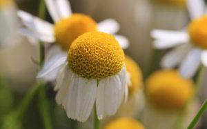 nature-blossom-plant-flower-petal-bloom-1332454-pxhere.com